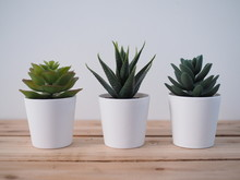Ornamental Plants With Cactus In White Pot On Wooden Table