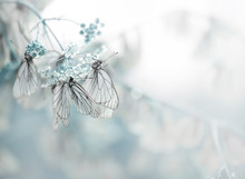 Butterfly. Butterflies. Macro,...