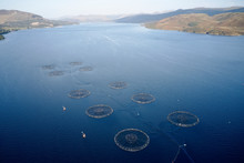 Fish Farm Salmon Marine Sea Ne...