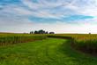 Through the cornfield