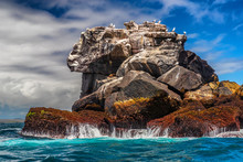 Galapagos Nature Landscape And Animals: Nazca Boobies And Sea Lions On Rock In Ocean. Iconic And Famous Galapagos Animals And Wildlife. Nazca Boobies Are Native To The Galapagos Islands, Ecuador.