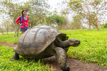 Galapagos Giant Tortoise And W...