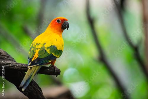 Deurstickers Papegaai Beautiful parrot, Sun Conure on tree branch