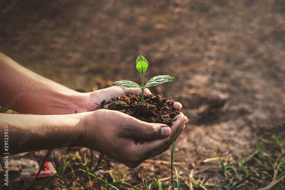 Fototapeta Tree planting on volunteer family's hands for eco friendly and corporate social responsibility campaign concept