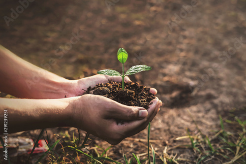 Photo Tree planting on volunteer family's hands for eco friendly and corporate social