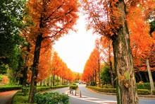 美しく鮮やかな秋のオ...