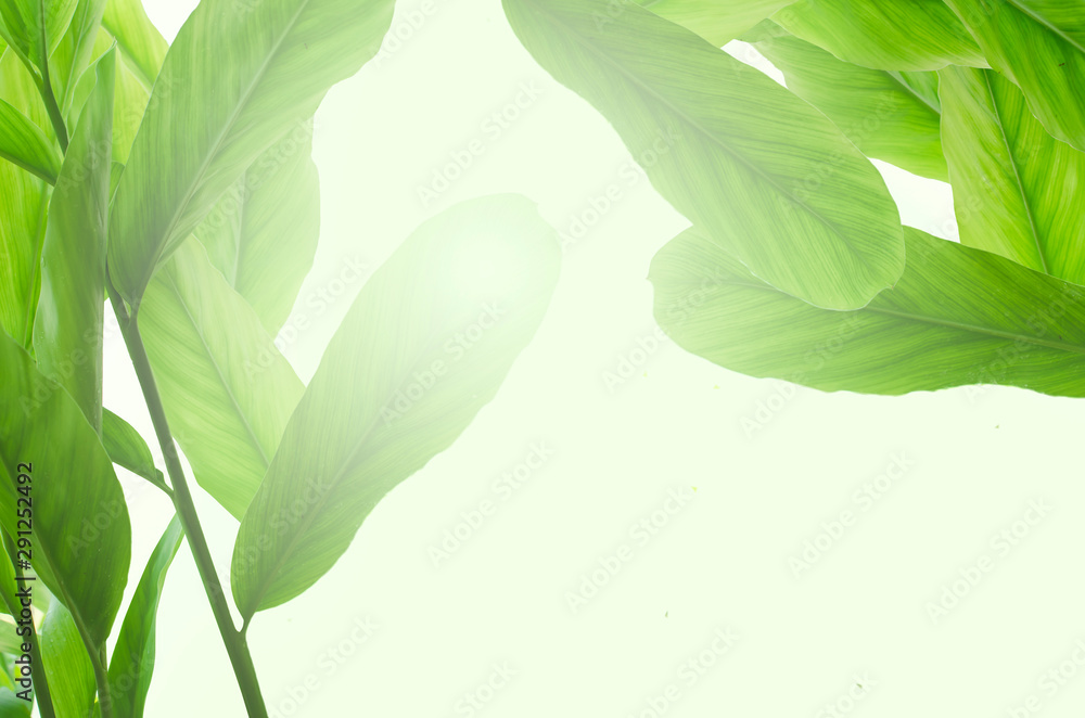 Fototapety, obrazy: Tropical leafs isolated on white background