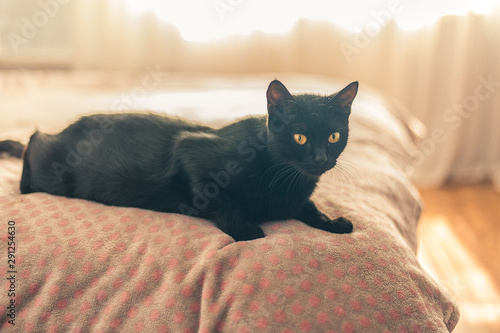 black cat lies on the bed in the bedroom