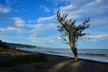 The Silhouette Of A Tree On Amberley Beach, New Zealand.