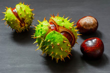 Several Ripe Conkers In Peel And Without It On A Black Wooden Background.