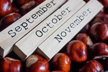 Decorative Autumn Calendar On The Chestnut Seeds Background