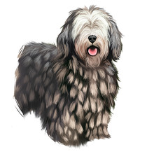 Bergamasco Shepherd, Pastore Bergamasco, Bergamasco Dog Digital Art Illustration Isolated On White Background. Italian Origin Herding, Working Dog. Cute Pet Hand Drawn Portrait Graphic Clipart Design