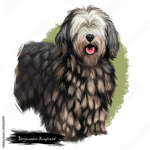 Bergamasco Shepherd, pastore bergamasco, Bergamasco dog digital art illustration isolated on white background Canvas Print