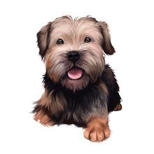 Border Terrier Dog Digital Art...