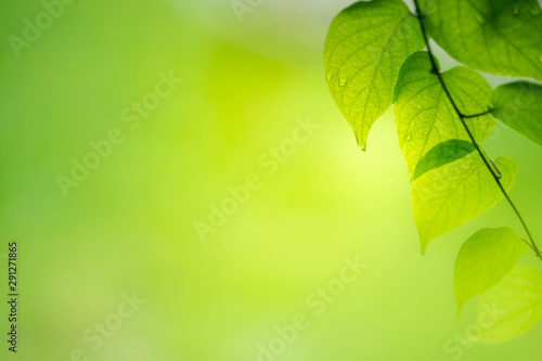 Foto auf AluDibond Lime grun Closeup view of green leaf on blurred background.