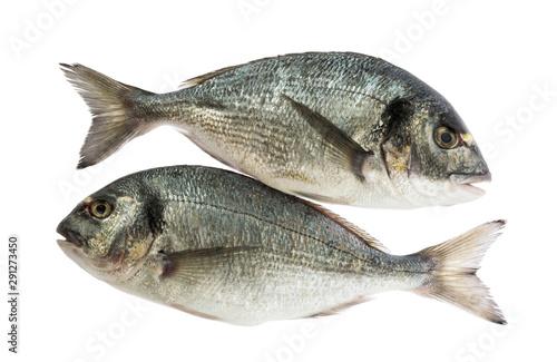Fotografie, Obraz  dorado fish isolated without shadow