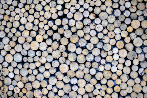 Circle wood texture background.