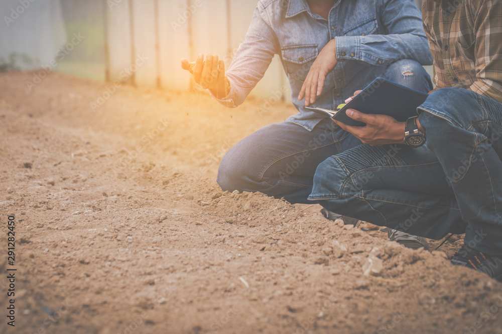 Fototapety, obrazy: farmer checking and controling produce to qulity of product in farm field