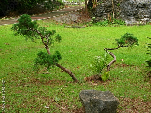 Fényképezés Small branchy bonsai tree in a city park growing in the ground