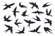 Flying Birds Silhouette. Flock Of Swallows, Sea Gull Or Marine Birds Isolated On White Background. Vector Set Illustration Of Different Steps Free Fly Silhouettes Feather Wings Bird
