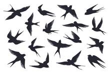 Flying Birds Silhouette. Flock...