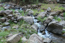 Shallow River With Many Boulders In River Bed. Grass Grows Between Stones And Along The Banks. Large Clumps Of Grass With Slender Long Leaves, Fresh Green Color. Background With Tropical Rain Forest.