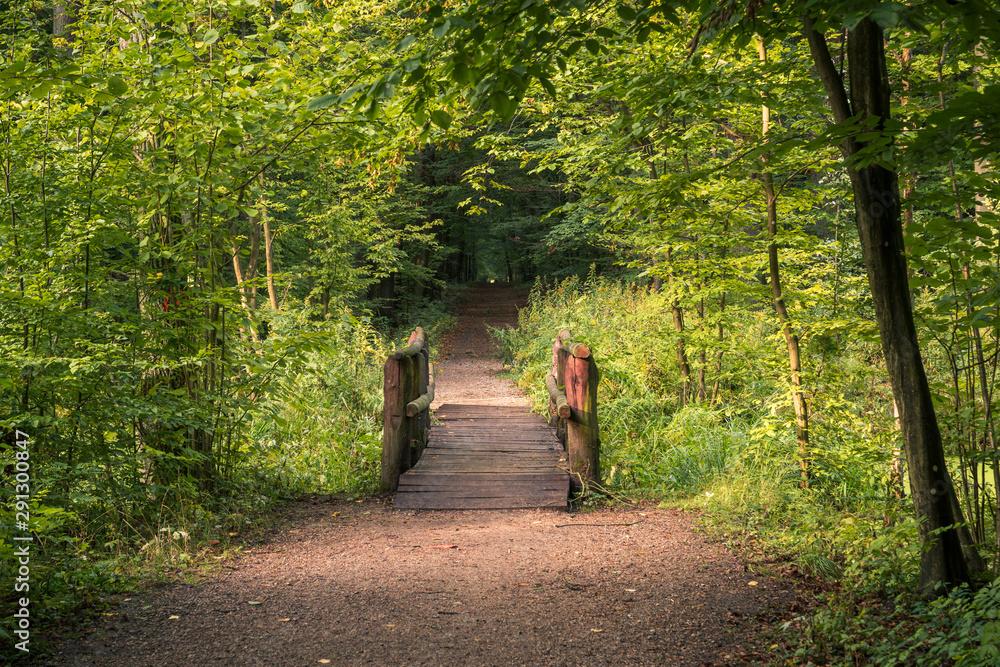 Wooden bridge at summer in Kabacki forest, Masovia, Poland