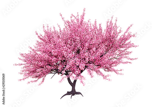 3D Rendering Pink Blooming Sakura Tree on White Fototapete