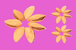 canvas print picture - inshell almonds isolated on pink background