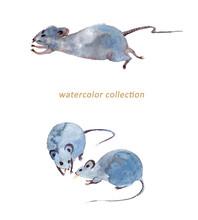 水彩のネズミたち