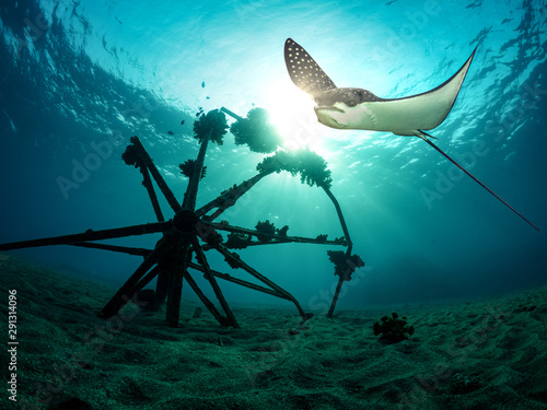 Eagle ray hovers over the sea bottom Wallpaper Mural