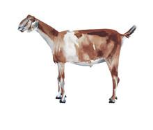 Goat Farm Animal Watercolor Pa...