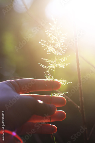 Hand holding Beautiful grass flowers with natural sunlight Wallpaper Mural