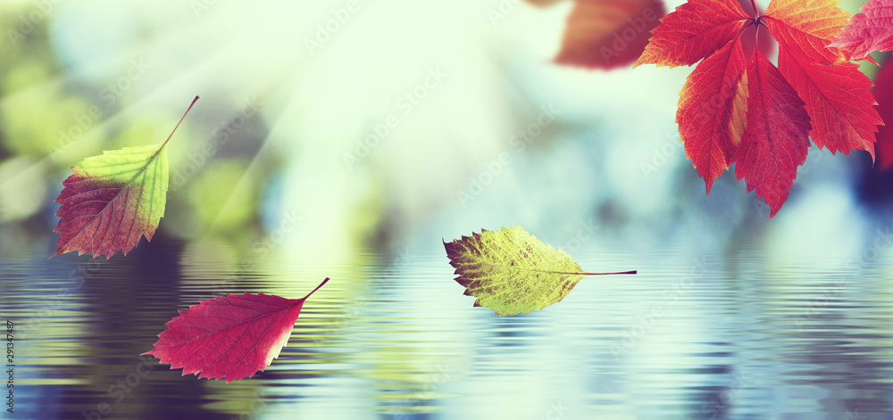 Fototapeta tinted image of autumn leaves on a background of the water surface closeup