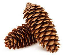 Pine Cone Isolated On White Background, Clipping Path, Full Depth Of Field