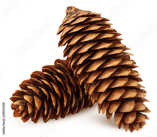 Pinturas sobre lienzo  Pine cone isolated on white background, clipping path, full depth of field