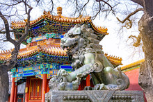 Bronze Chinese Guardian Lion Statue In Yonghegong Temple (Lama Temple) In Beijing, China