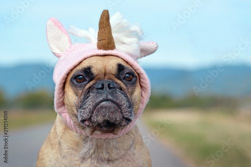 Fotografia Cute French Bulldog dog dressed up with Halloween costume in shape of pink knitt
