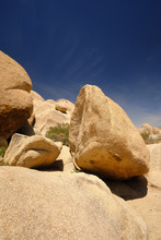 Joshua Trees And Gneiss Rocks In And Around Joshua Tree National Park Bordering The Colorado And Mojave Desert