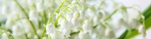 Banner Of Lily Of The Valley F...