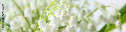 banner of Lily of the valley flowers. Natural background with blooming lilies of the valley lilies-of-the-valley
