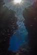 Fischschwarm im Gegenlicht in magischer Unterwasserlandschaft