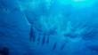 canvas print picture - Delfine spielen in den Wellen beim Tauchen in Ägypten