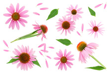 Coneflower Or Echinacea Purpur...