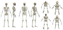 Multiple Poses Of Skeleton Whi...