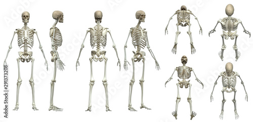 Fotografía  Multiple poses of skeleton white background  isolated 3d render