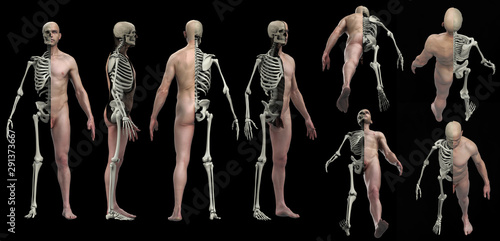 Skeleton and skin cross section view of male body and anatomy 3d render Wallpaper Mural