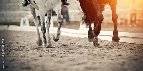 Fotomural Legs of two sports horses galloping around the arena.