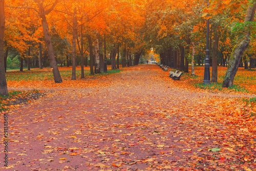Spoed Foto op Canvas Baksteen Autumn park alley road in city landscape. People walking on path in autumn park with golden leaves and trees on october weather. Beautiful autumnal park. Beauty nature fall scene. Forest at september.
