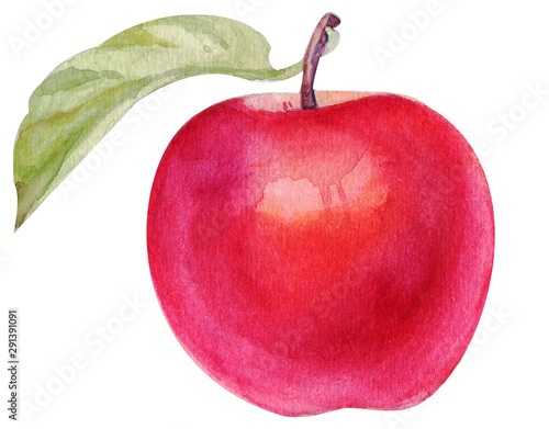 Watercolor red apple on white background. Handrawing illustration - 291391091